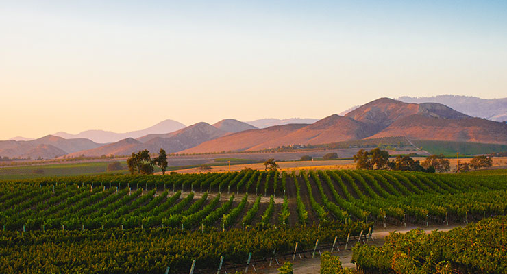 Beautiful view of Southern California Wine Country. The 2020 CUES Execu/Blend will be held in Santa Barbara, CA